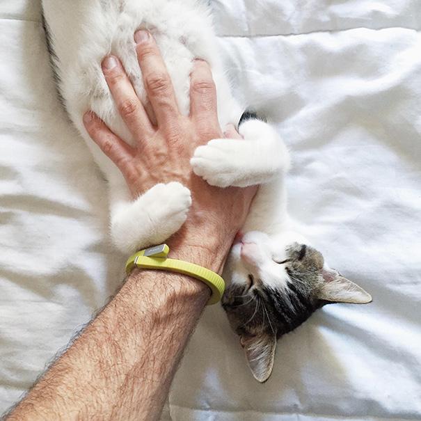 gato mimado