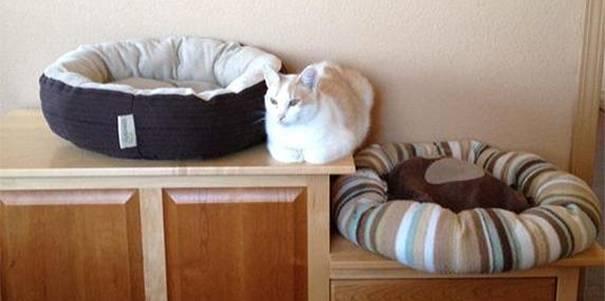 Gato acostado en medio de dos camas para gatos