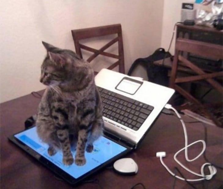 Gato sentado en el monitor de una laptop