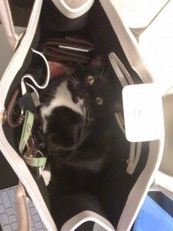 Gato en color negro metido dentro de una bolsa de mano para mujer