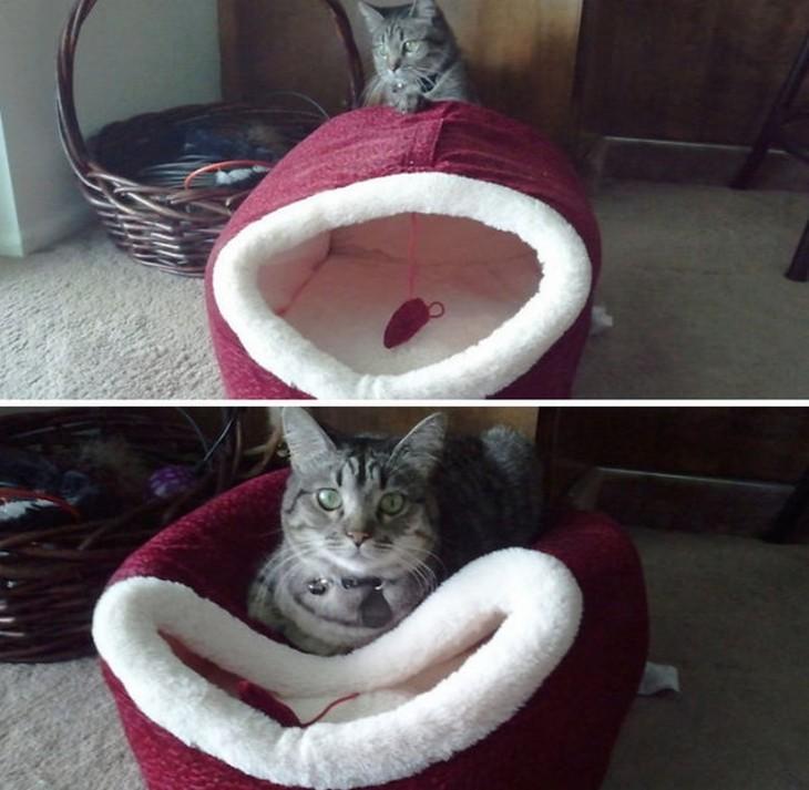 Gato acostado sobre su cama