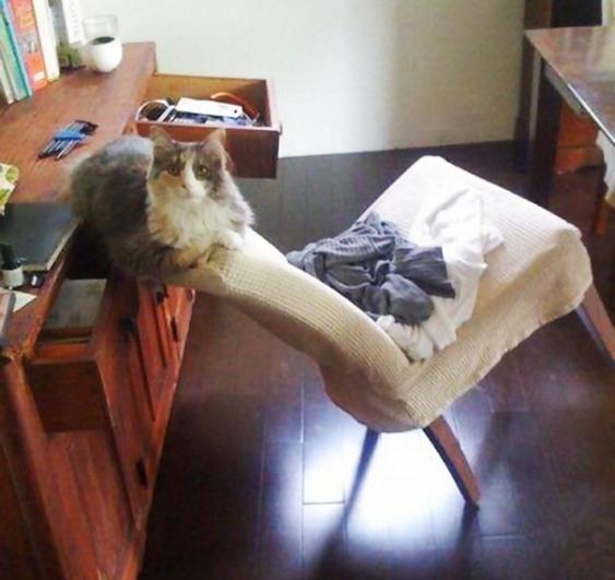 Gato antre un mueble y una silla con un buen equilibrio
