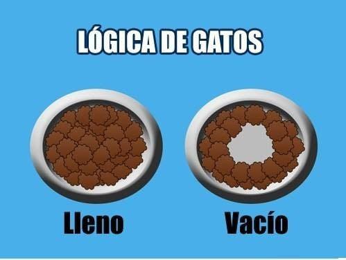 Lógica de los gatos comparando sus platos de comida