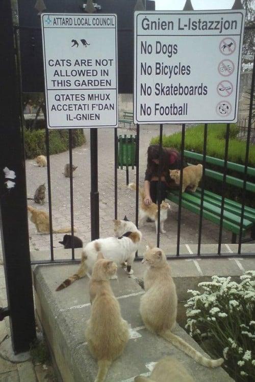 Letrero en un jardín que dice que no se permiten gatos con muchos gatos alrededor