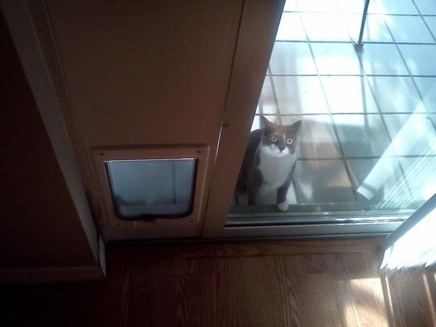 Gato detrás de una puerta de vidrio a un costado de su puerta para gatos