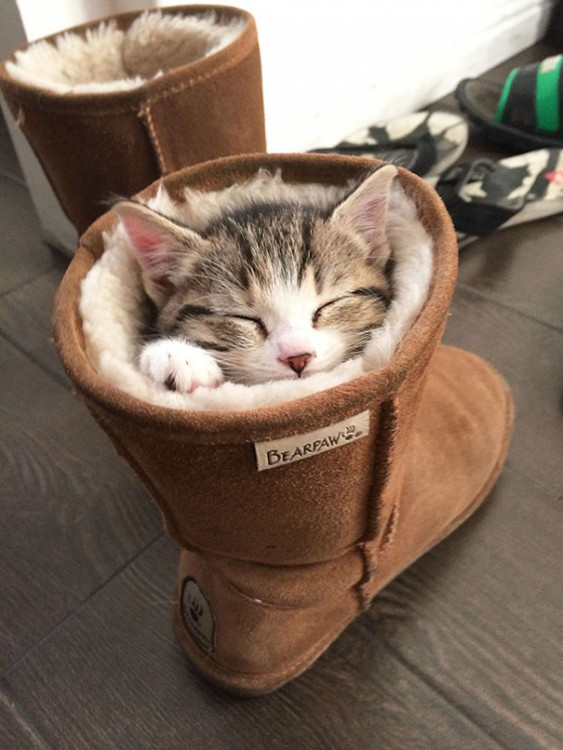 Un pequeño gato dormido dentro de una bota