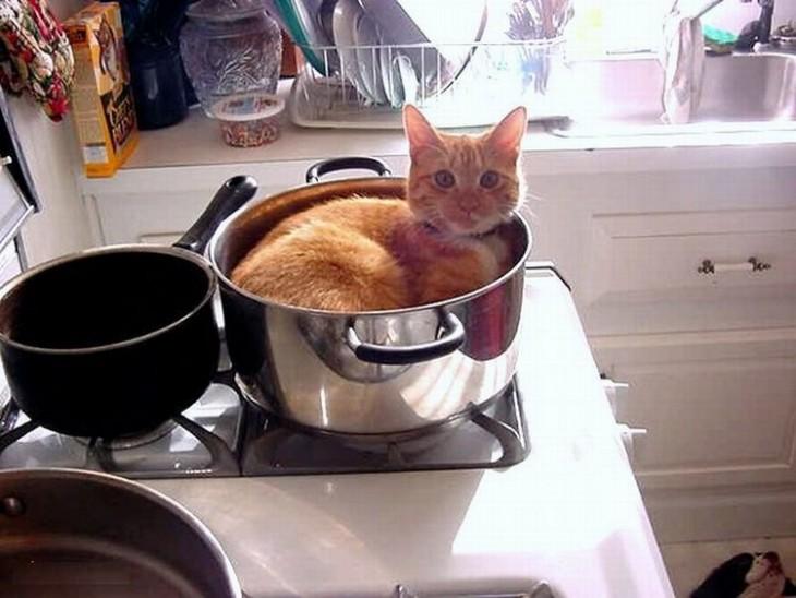 Gato acostado en un sartén sobre una estufa