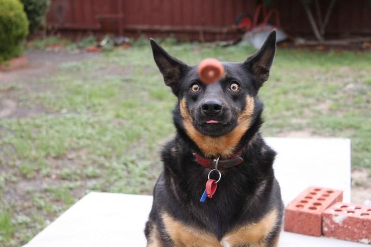 perro atrapando su premio