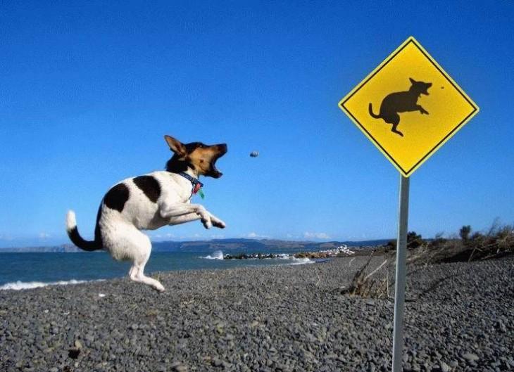 perro parece imitar señalamiento