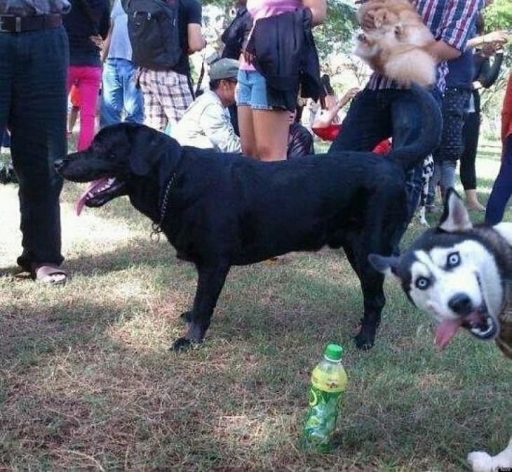 perro le trolea foto a otro