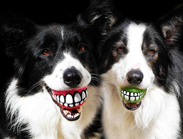 pelotas con dibujo de risa dientona para perros