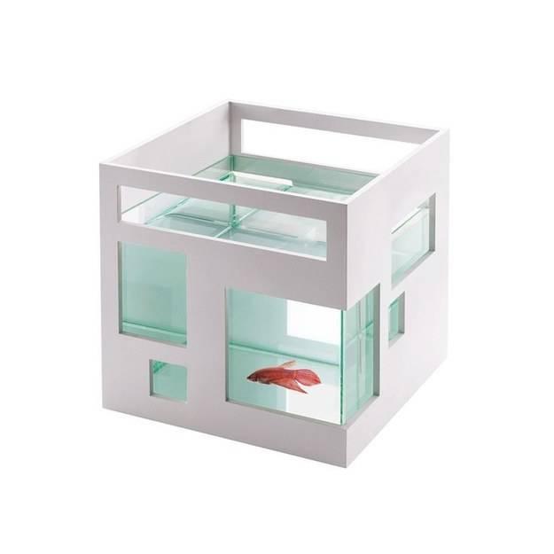un pez con un hogar muy minimalista