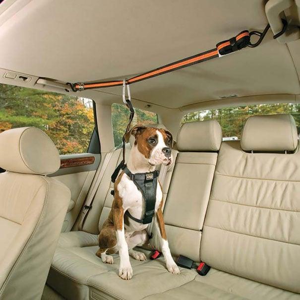 cinturon de mascotas para coche