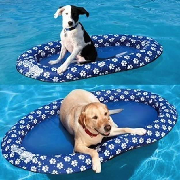 flotador de alberca para mascotas