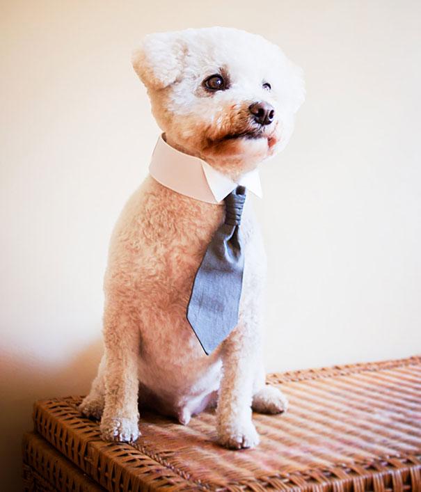 corbata para perro