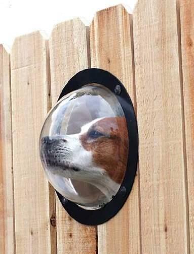 visor para mascotas entre las rejas