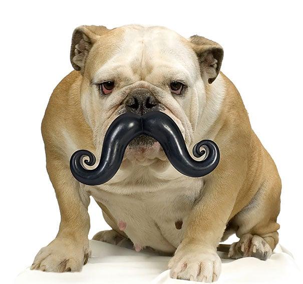 pelota en forma de bigotes para perro
