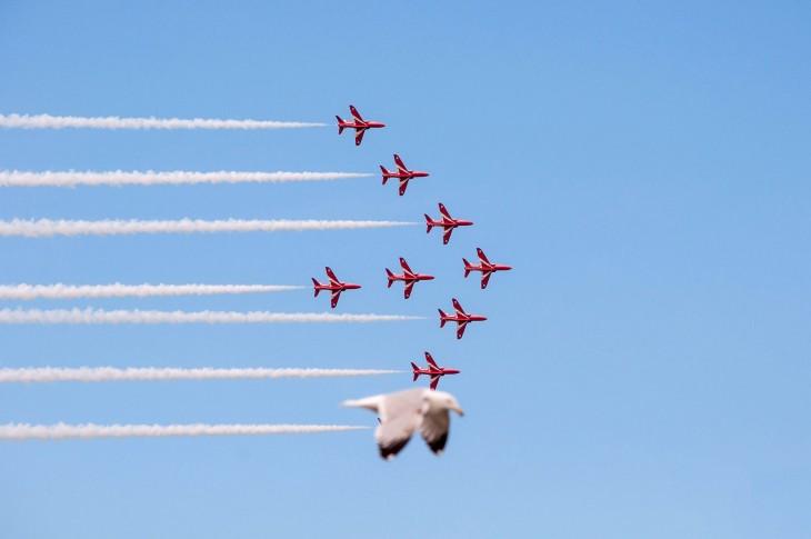 gaviota parece avion de la fuerza aerea