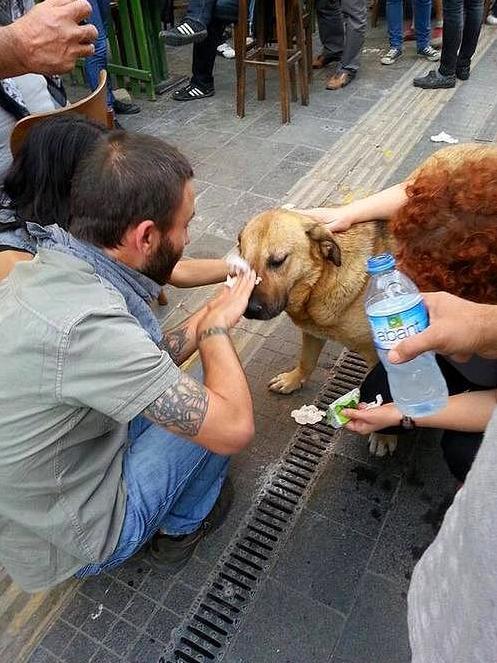 manifestantes ayudan a perro a limpiar el gas lacrimogeno de sus ojos