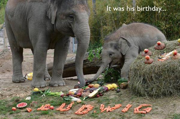 elefante feliz de ver tanta comida