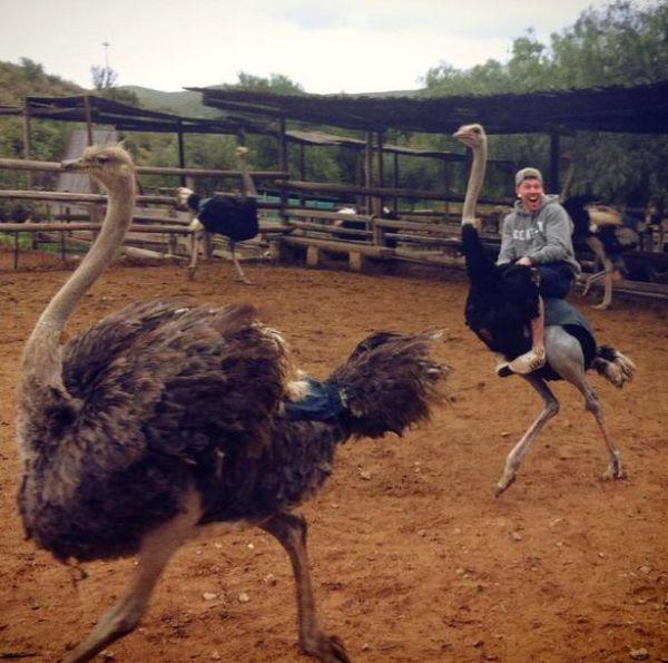 hombre montando avestruz feliz de la aventura