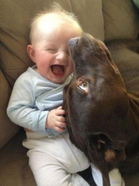 niño feliz porque el perro le hace cosquillas con su nariz
