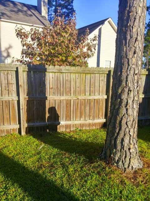 sombre de una niña escondida detrás de un árbol