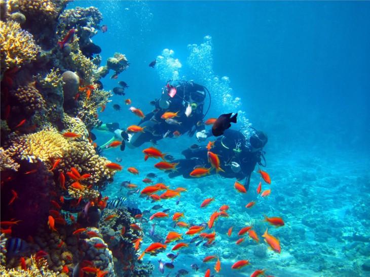 Buzos en el Golfo de Papagayo, Costa Rica