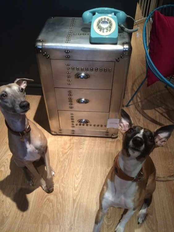 perros a un lado de telefono analogico