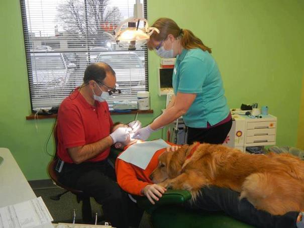 perro ayuda a dentista a tranquilizar a sus pacientes