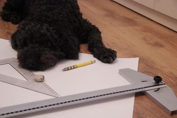 perro recostado sobre unos planos