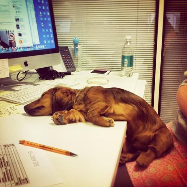 perro dormido sobre el escritorio