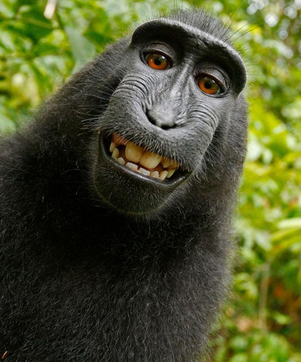 Fotografía de un chango posando para la cámara simulando que esta sonriendo