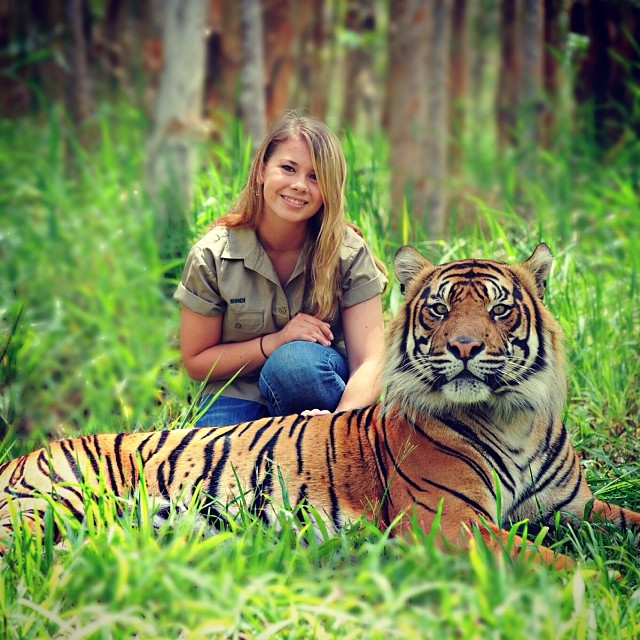 Bindi Irwin junto a un tigre en un pasto
