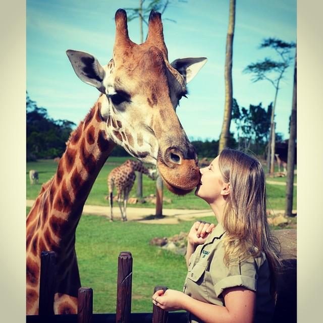 Bindi Irwin besando a una jirafa en el zoológico de Australia