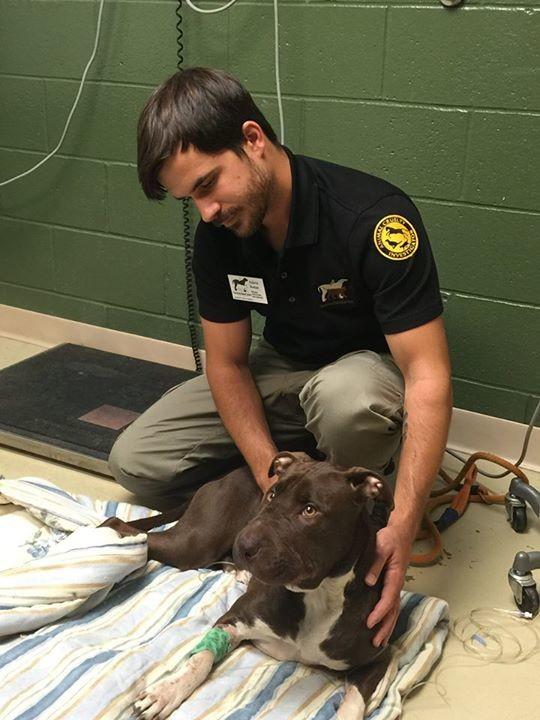 director anti crueldad de la sociedad animal con una perrita rescatada lastimada de su hocico