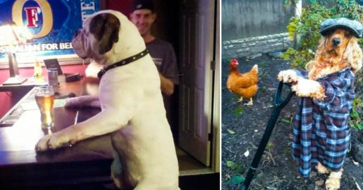 Perros que hacen cosas increibles