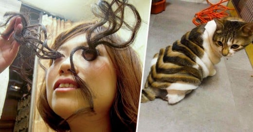 las pestañas y el corte de pelo del gato japonenes