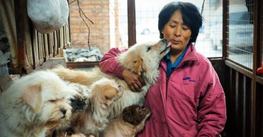 Mujer resta a perros del terror del festival donde son sacrificados
