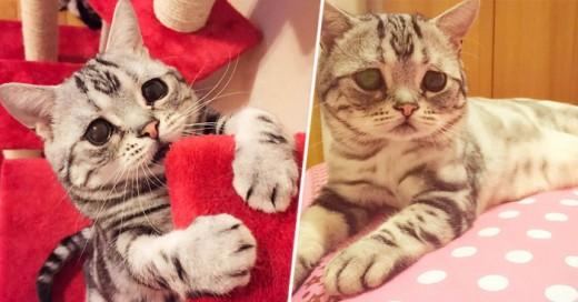Este gato por tener esa cara tan particular se ha convertido en toda una celebridad en internet