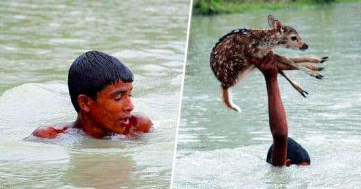 Este joven expone su vida para salvar a esta cría de venado