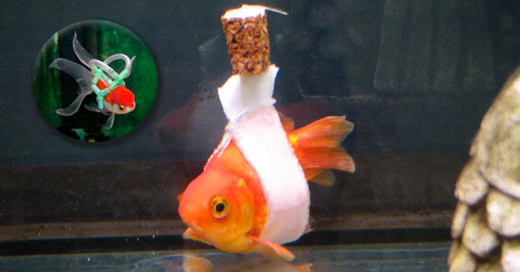 Ayudando a un pequeño pez