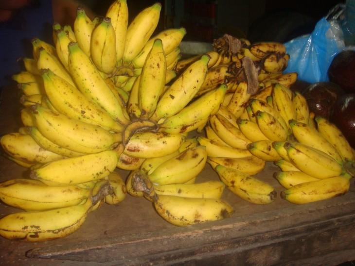 Comparación de los plátanos de 1800 a los plátanos actuales