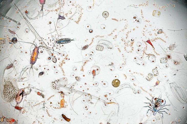 Imagen de una gota de agua de mar aumentado 25 veces