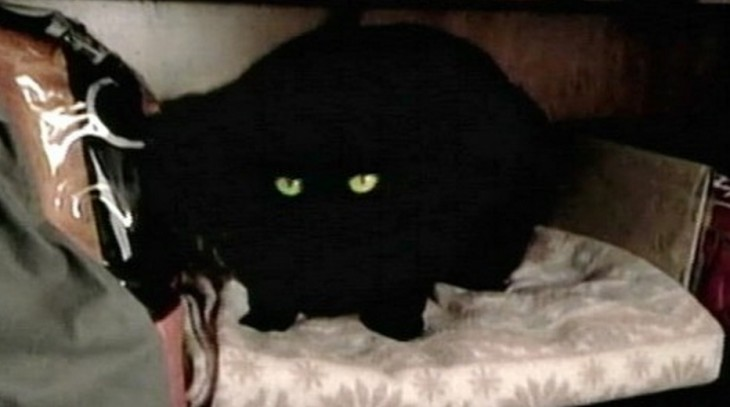 Datos increíblemente extraños e interesantes (Gato hereda fortuna)
