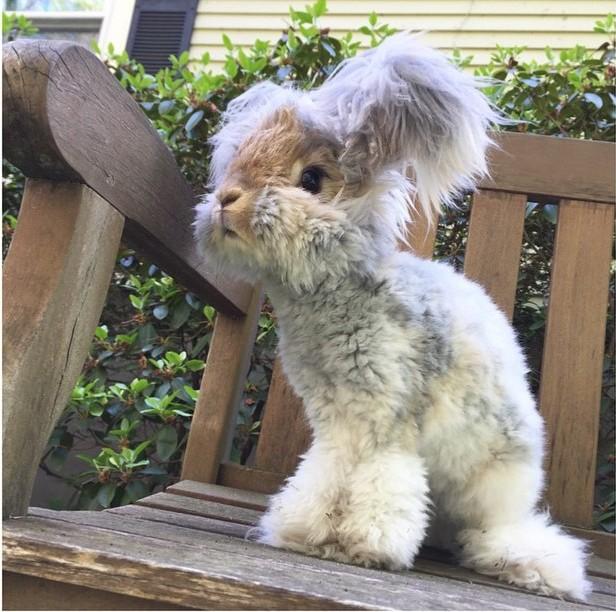 Fotografía de el conejo Wally sentado en una silla en el jardín
