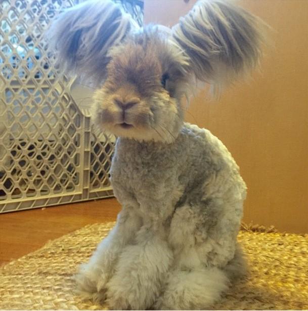 El conejo Wally con grandes orejas y peinado increíble