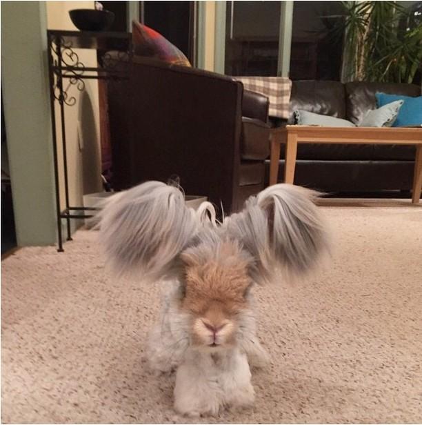 El famoso conejo Wally parado en una alfombra