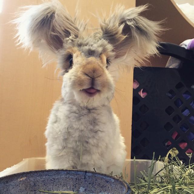 El conejo Wally sode orejas en forma de colas sonriendo