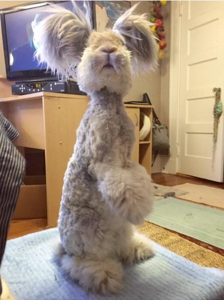El conejo Wally parado en dos patas sobre un mueble